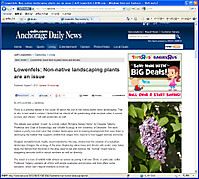 Lilac_adn