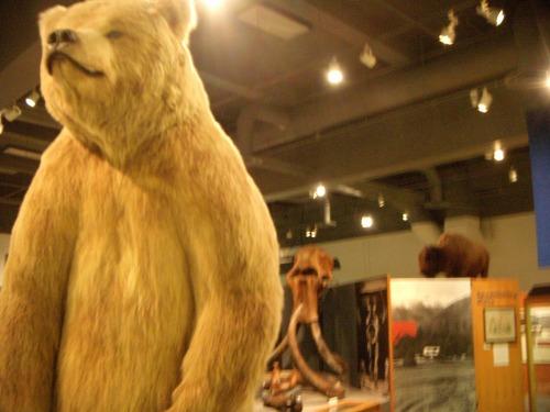 UAF Museum Dscn2123
